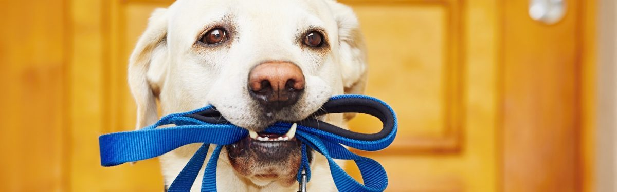 Dog Supplies - pets for sale in grove city