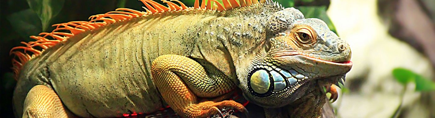 Reptiles Available for Sale - Visit Petland Grove City, Ohio!