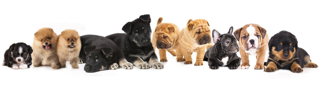 Available Puppies-pet for sale in grovecity
