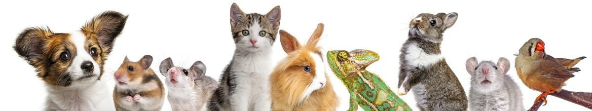 pets for sale in grove city