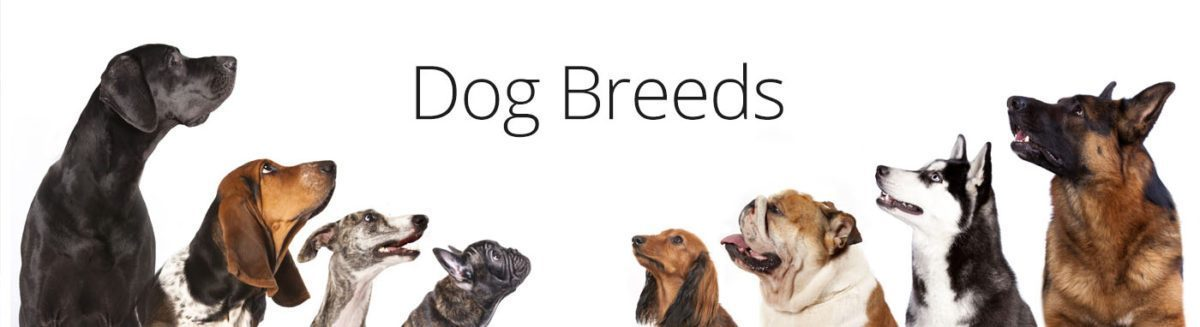 Dog Breed puppies for sale in grove city