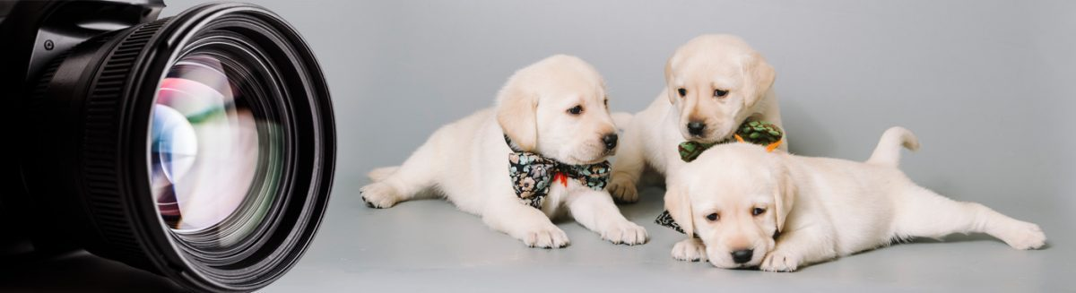 Puppy Photo Gallery-puppies for sale in grove city